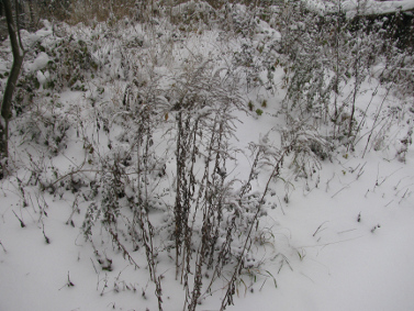winter_20100702_1474078280