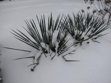 winter_20100702_1648896425