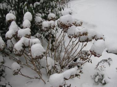 winter_20100702_1778673943